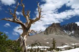 Explore Great Basin National Park, Nevada