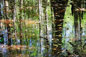Explore Congaree National Park, South Carolina