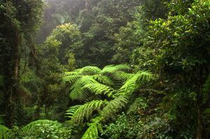 Explore Border Ranges National Park, New South Wales & Queensland, Australia (UNESCO site)