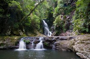 Explore Lamington National Park, Queensland, Australia (UNESCO site)