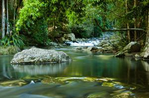 Explore Springbrook National Park, Queensland, Australia (UNESCO site)