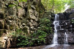 Explore Barrington Tops National Park, New South Wales, Australia (UNESCO site)