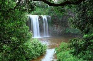 Explore Dorrigo National Park, New South Wales, Australia (UNESCO site)