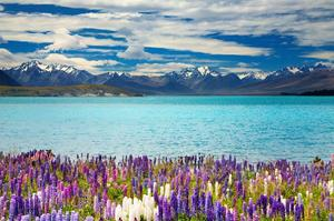 Explore South Island, New Zealand