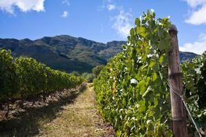 Wine Tasting in Cape Winelands, South Africa
