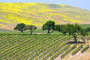 Wine Tasting in Santa Barbara, California