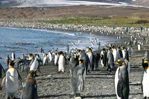 Visit South Georgia & South Sandwich Islands