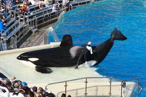 Visit SeaWorld San Diego, California