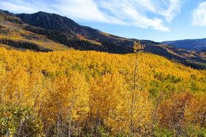 See 80,000 year old Pando Trees at Fishlake National Forest, Utah