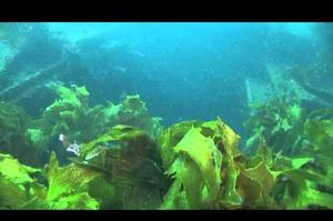 Wreck Dive Rainbow Warrior, New Zealand
