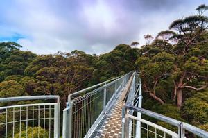 Walk across Tree Tops in the Valley of the Giants, Australia
