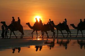 Ride a Camel on Cable Beach, Western Australia