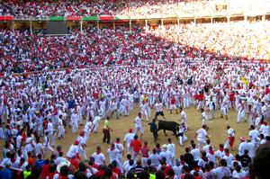 Attend Running of the Bulls, Pamplona, Spain