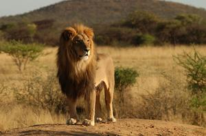 Seeing Africa's Big 5 in the Wild