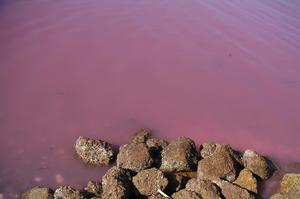 See Lake Retba (Pink Lake), Senegal