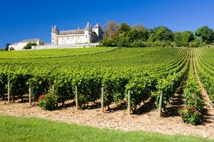 Cycle Route des Grands Crus, Burgundy, France