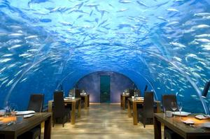 Dine Underwater at Ithaa Undersea Restaurant, Maldives