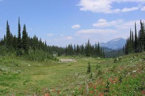 Explore Mount Revelstoke National Park, BC, Canada