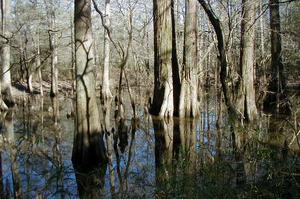 Explore Big Thicket National Preserve, Texas