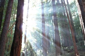 Explore Muir Woods National Monument, California