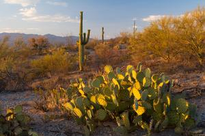Explore Sonoran Desert National Monument, Arizona
