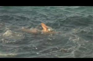 Swim Across the English Channel