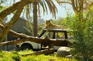 Visit San Diego Zoo Safari Park, California