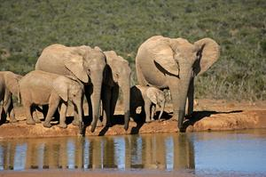 Explore Addo Elephant National Park, South Africa