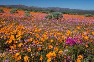Explore Namaqua National Park, South Africa