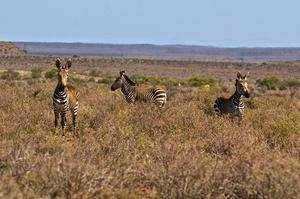 Explore Mountain Zebra National Park, South Africa