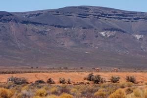 Explore Tankwa Karoo National Park, South Africa