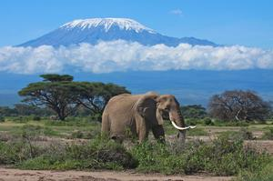 Explore Amboseli National Park, Kenya