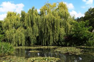Visit Claude Monet's Garden, Giverny, France