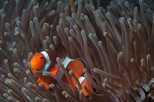 Dive Tubbataha Reefs Natural Park, Philippines (UNESCO site)