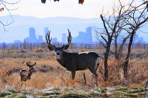 Explore Rocky Mountain Arsenal National Wildlife Refuge, Colorado