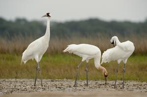 Birding at Aransas National Wildlife Refuge, Texas