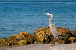 Birding at Pelican Island National Wildlife Refuge, Florida