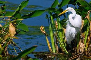 Birding at Everglades National Park, Florida