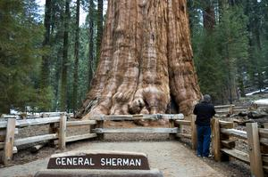 See General Sherman Tree, Sequoia National Park, California