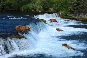 Explore Katmai National Park, Alaska