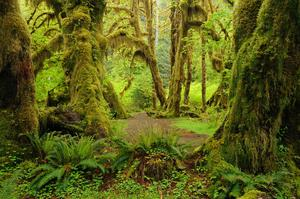 Explore Hoh Rainforest, Olympic National Park, Washington