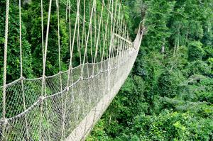 Walk Canopy Walkways at Kakum National Park, Ghana