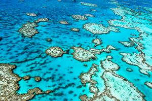 Dive the Great Barrier Reef, Australia (UNESCO site)
