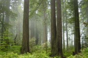 Explore Redwood National and State Parks, California (UNESCO site)
