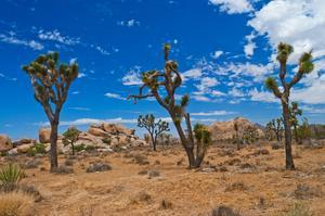 Explore Joshua Tree National Park, California