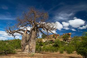Explore Mapungubwe National Park, South Africa (UNESCO site)