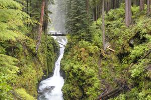 Explore Olympic National Park, Washington (UNESCO site)